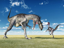 Megalosaurus and Velociraptor Royalty Free Stock Photos