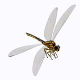 Meganeura蜻蜓身体 免版税库存照片