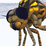 Meganeura Dragonfly Head Royalty Free Stock Photo