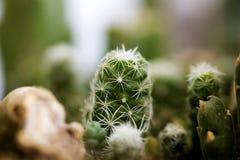 Megapíxeles de alta calidad del fondo macro del cactus 50,6 foto de archivo libre de regalías
