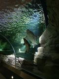 Megashow de Lituânia do museu dos tubarões de Waterpark fotos de stock