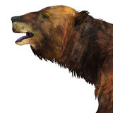 Megatherium Sloth Head Stock Photography