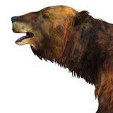 Megatherium Sloth Head Stock Photography