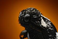 Megatomaundata met microscoopdoelstelling wordt van vele schoten wordt gestapeld genomen dat royalty-vrije stock foto's