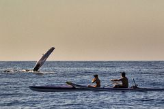 Megattera che ondeggia ai kayakers che erano nera di sorveglianza Lahaina della balena su Mau fotografia stock