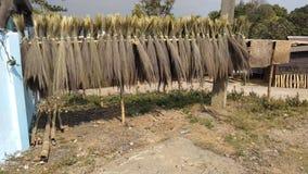 Full broom in sun lights stock photos