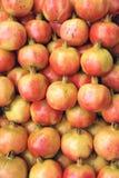 Megranate frukter Arkivbild
