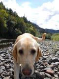 Megs up rzekę Obrazy Stock