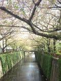 Meguro河樱花步行,东京,日本 库存照片