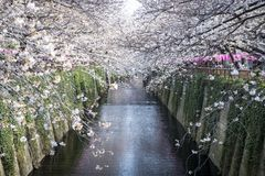 Meguro Canal Royalty Free Stock Image