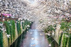 Meguro Canal in Spring Royalty Free Stock Photos