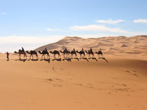 Mehare con el senderismo del camello Imágenes de archivo libres de regalías