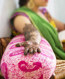 Mehendi or Hena or Hina Stock Photo