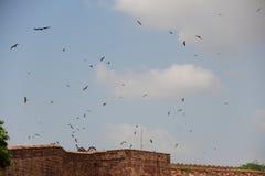 Meherangarh堡垒鸟在乔德普尔城 免版税库存照片