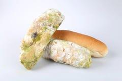 Mehltau auf Brot Verdorbene Nahrungsmittel, die zum Verbrauch schädlich sind lizenzfreies stockfoto