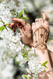Mehndi in blossom Stock Photos