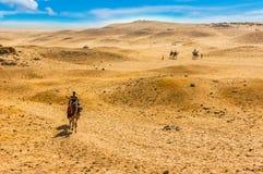 Mehr in meinem Portefeuille Kamele in der Wüste lizenzfreie stockbilder