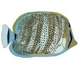 Mehrbandbutterflyfish-Vektor-Illustration Lizenzfreies Stockfoto