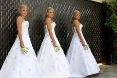 Mehrfache Braut Stockfoto