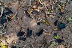 Mehrfache Farbe von trockenen Blättern lizenzfreies stockfoto