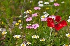 Mehrfachverbindungsstelle farbige Blumen Lizenzfreies Stockfoto