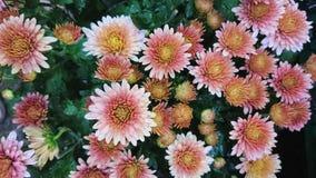 Mehrfarbenblumen Stockfotografie
