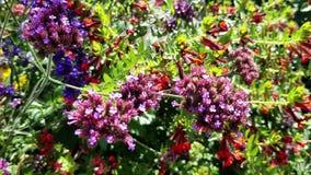 Mehrfarbenblumen mit Bienen-Bestäubern stock footage