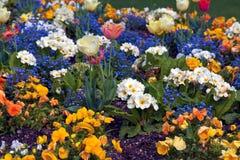 Mehrfarbenblumenhintergrund Stockbilder