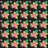 Mehrfarbenhintergrund des abstrakten nahtlosen tropischen mit Blumenmusters Lizenzfreies Stockbild