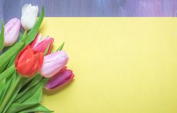 Mehrfarbentulpen auf einem Blatt des leeren Papiers Lizenzfreie Stockbilder
