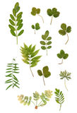 Mehrfarbenvielzahl des trockenen grünen Blattes Stockfotografie