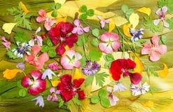 Mehrfarbige Applikationsreinigung von getrockneten gepressten Blumen stockfotografie