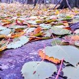 Mehrfarbige Blätter stockbild