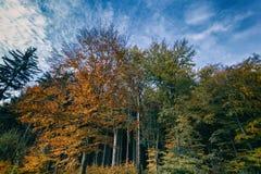 Mehrfarbige Blätter von Bäumen Stockbilder