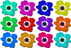 Mehrfarbige Blumen-Collage Lizenzfreie Stockfotografie
