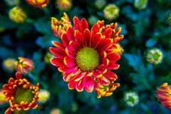 Mehrfarbige Blumen in den bunten Blumen bunt Lizenzfreie Stockfotos