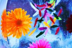 Mehrfarbige Blumen eingefroren in den Eiskasten transparent Stockbild