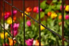 Mehrfarbige Blumen hinter dem Zaun Stockbild