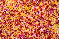Mehrfarbige Blumenblätter Stockfoto