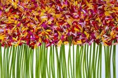 Mehrfarbige Blumenblätter mit Stämmen Stockfotografie