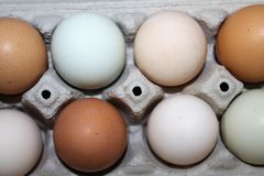 Mehrfarbige Eier im Karton Stockfotografie