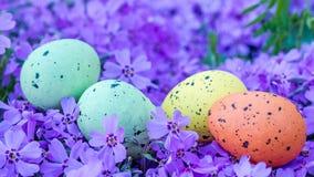 Mehrfarbige Eier Ostern auf violetten Blumen Stockfoto