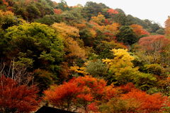 Mehrfarbige farbige Blätter Lizenzfreie Stockfotografie
