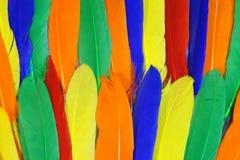 Mehrfarbige frohe Vogelfedern Lizenzfreie Stockbilder