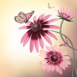 Mehrfarbige Gerberagänseblümchen und ein Schmetterling Stockbild