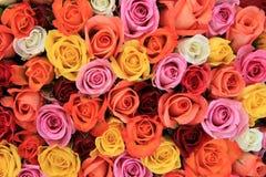 Mehrfarbige Hochzeitsrosen lizenzfreie stockfotos