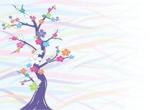 Mehrfarbige Kirschblüte   Lizenzfreies Stockfoto