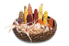 Mehrfarbige Ohren des getrockneten Mais im Weidenkorb Stockfotos