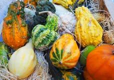 Mehrfarbige orange und grüne Kürbise auf Stroh Dekoration für Halloween Stockfotos