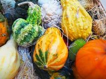 Mehrfarbige orange und grüne Kürbise auf Stroh Dekoration für Halloween Stockfoto